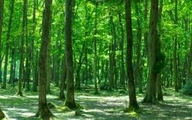 森林を守ろう
