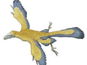 原始的な鳥・始祖鳥(しそちょう)とは