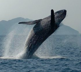 クジラ偶蹄目ってなに?