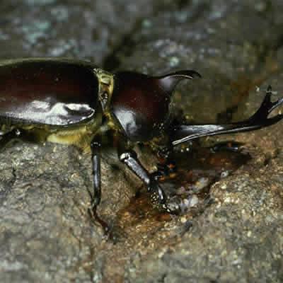 虫の体を観察しよう