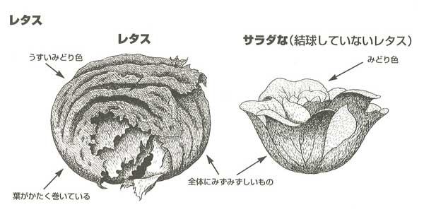 レタス・サラダな