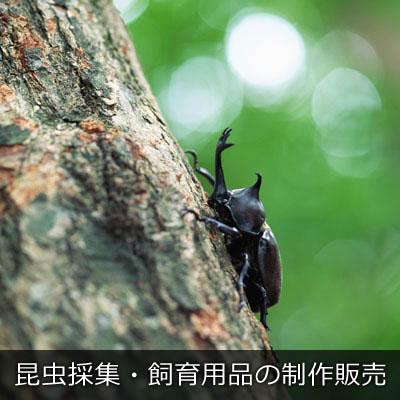 昆虫採集・飼育用品の制作販売