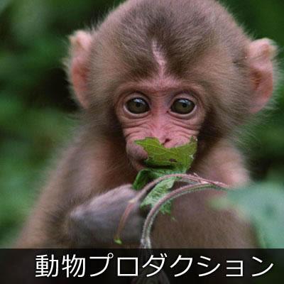 動物プロダクション