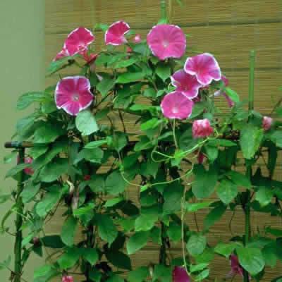 植物の種の育ち方
