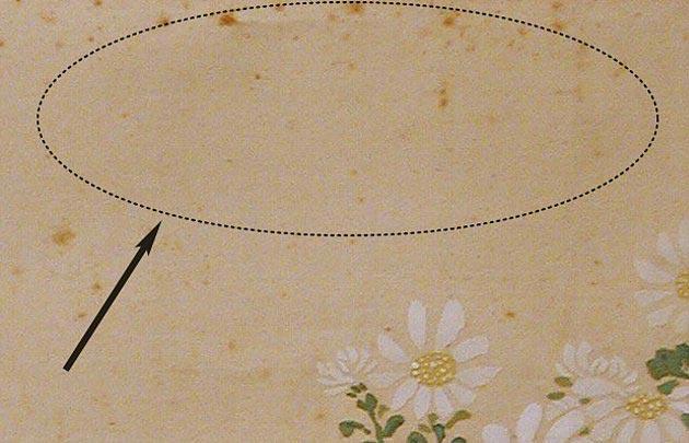 シミやカビの一例「カビ」
