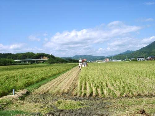 五穀豊穣の象徴 米と野菜