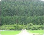 茨城県東茨城郡の山林