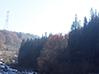 山形県山辺町の山林
