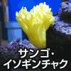 サンゴ、イソギンチャク