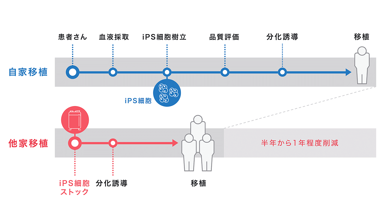 (提供:京都大学iPS細胞研究財団)