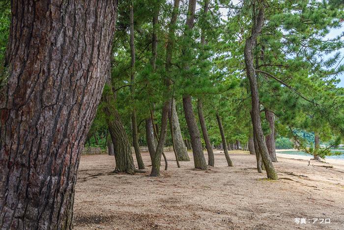 気比の松原公園