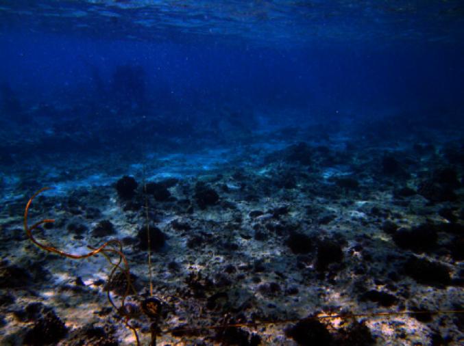 荒れ果てた海底の写真