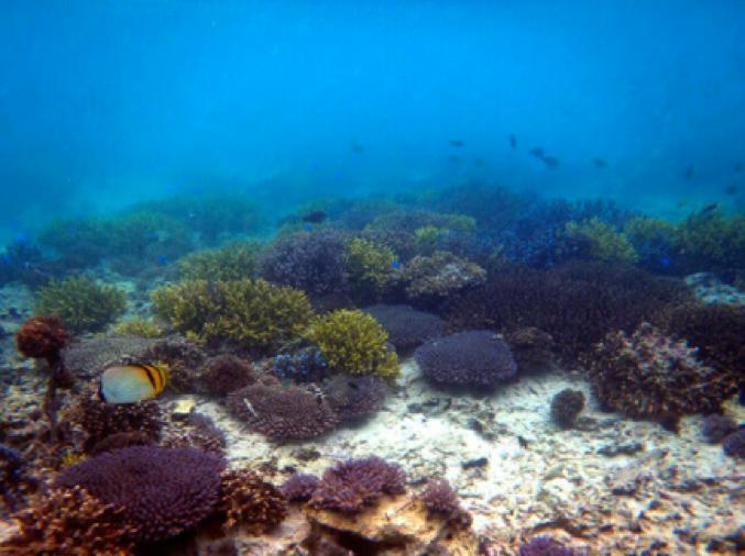 サンゴを移植して4年後の写真