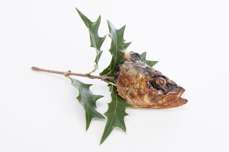 焼いたイワシをひいらぎの枝に刺してある