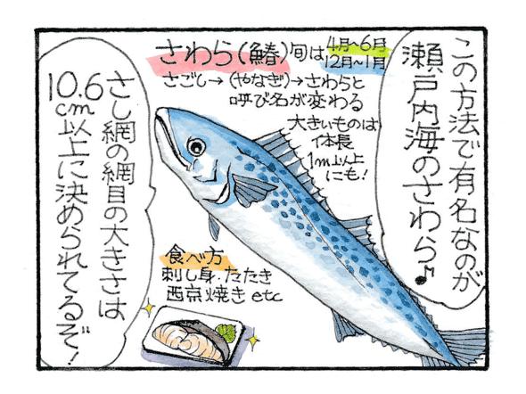 瀬戸内海のさわらは刺し網の網目の大きさが10.6cm以上に決められている