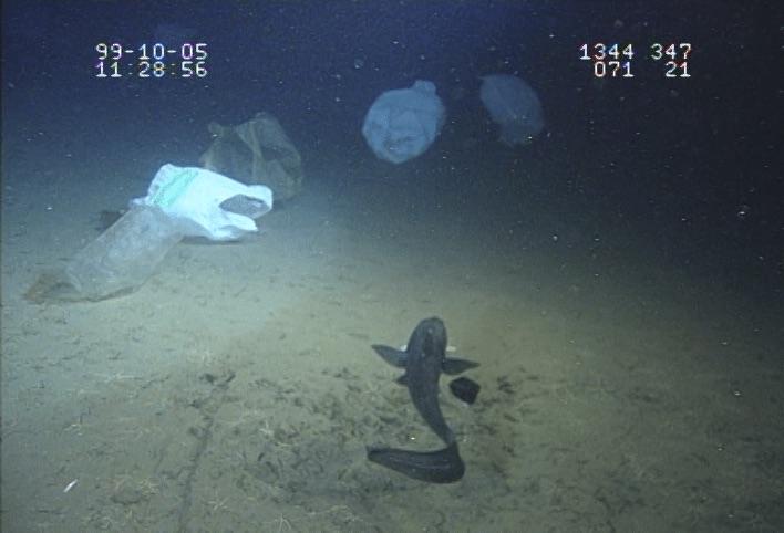 深さ1340メートルの海底にプラスチックの袋がいくつもある