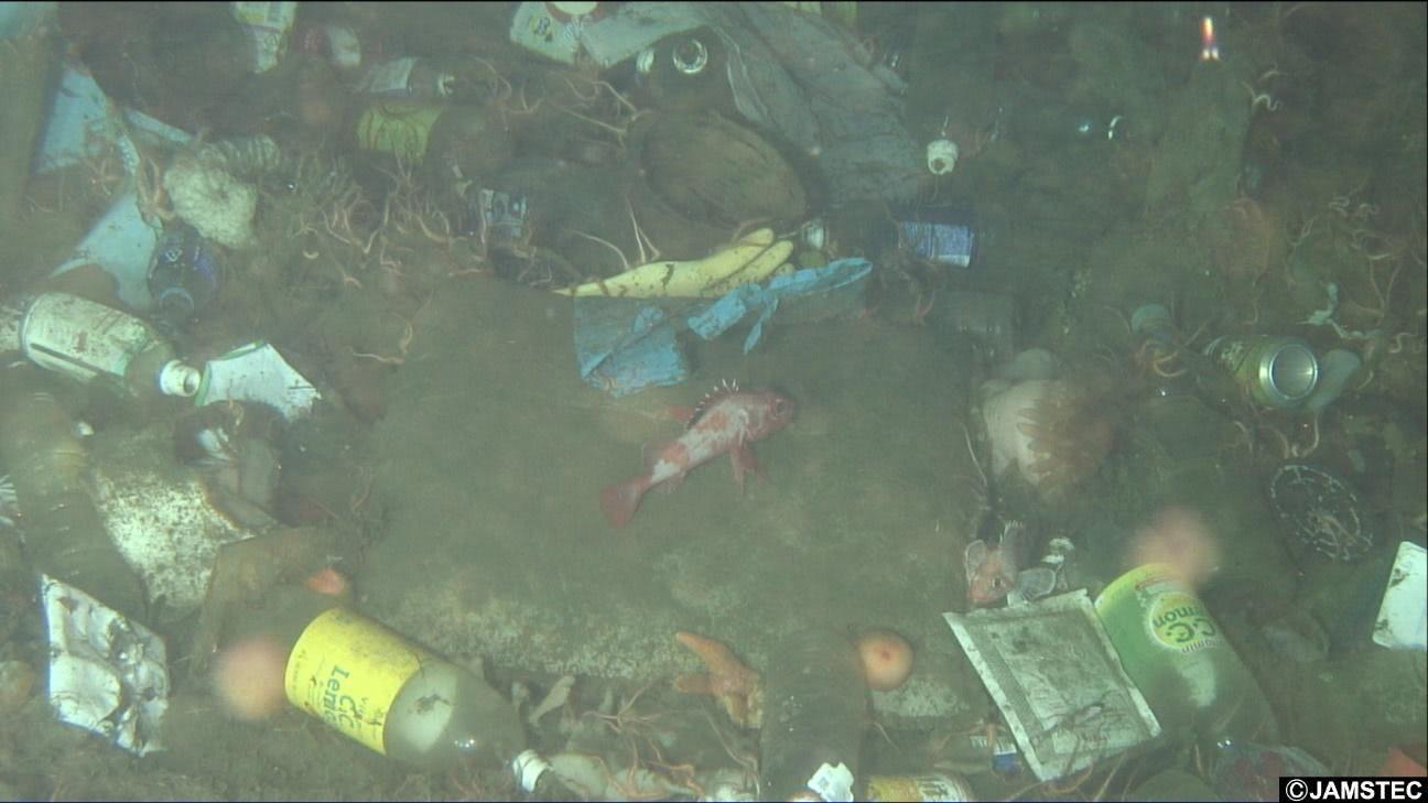 ペットボトルやプラスチックの袋が散乱する海底を魚が動き回る