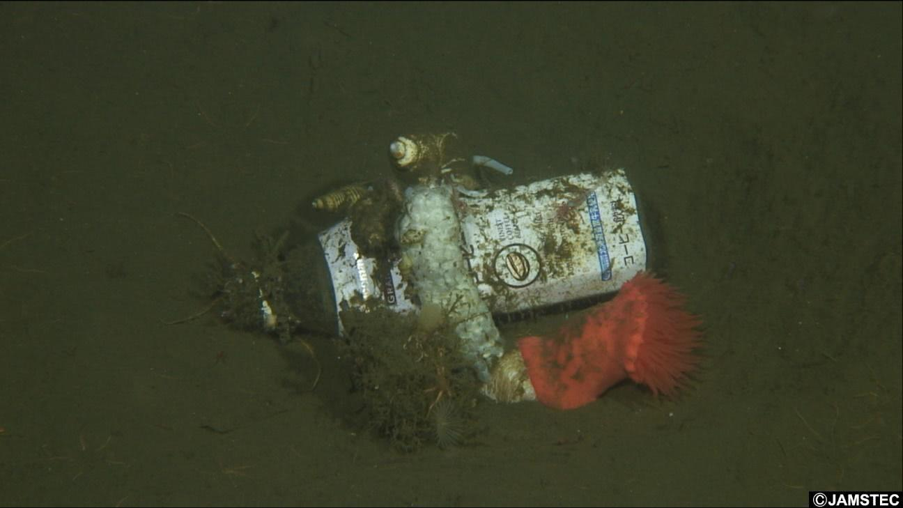 海底の泥に埋まるペットボトル
