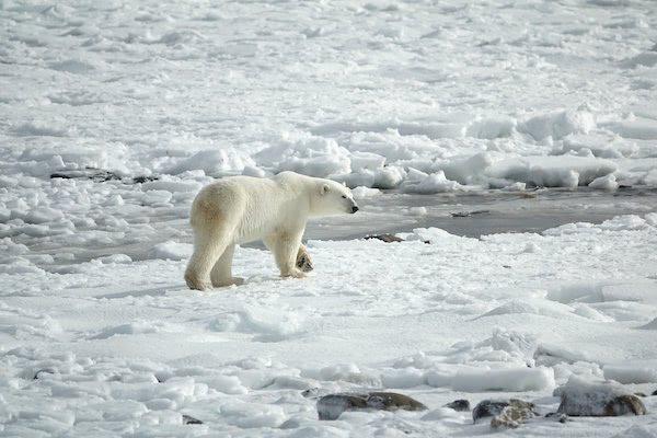 北極もプラスチックによる汚染! 雪に混じる廃プラの欠片