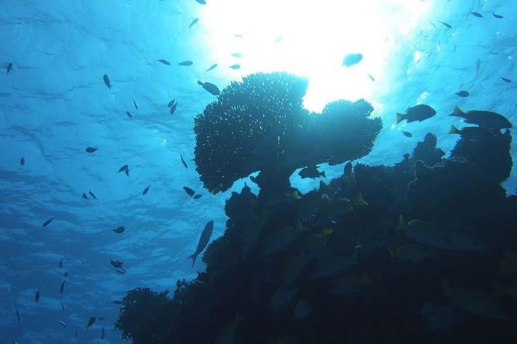 サンゴは、音を頼りに住み着きやすい場所を探す!?