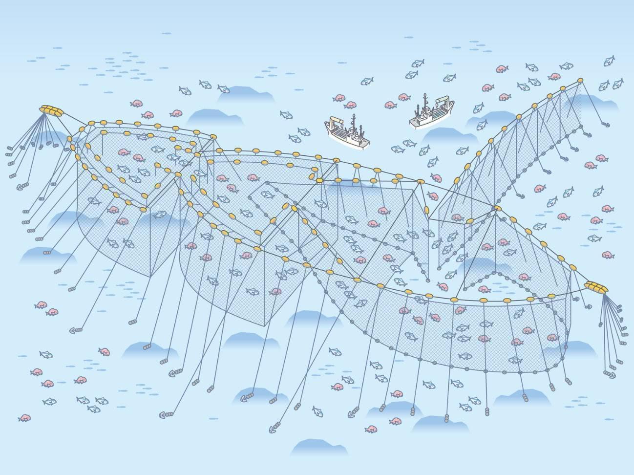 大型定置網
