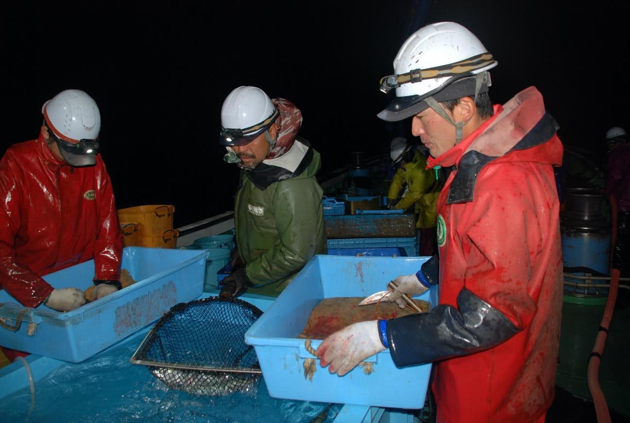 船上で魚を仕分ける早田大敷の船員ら