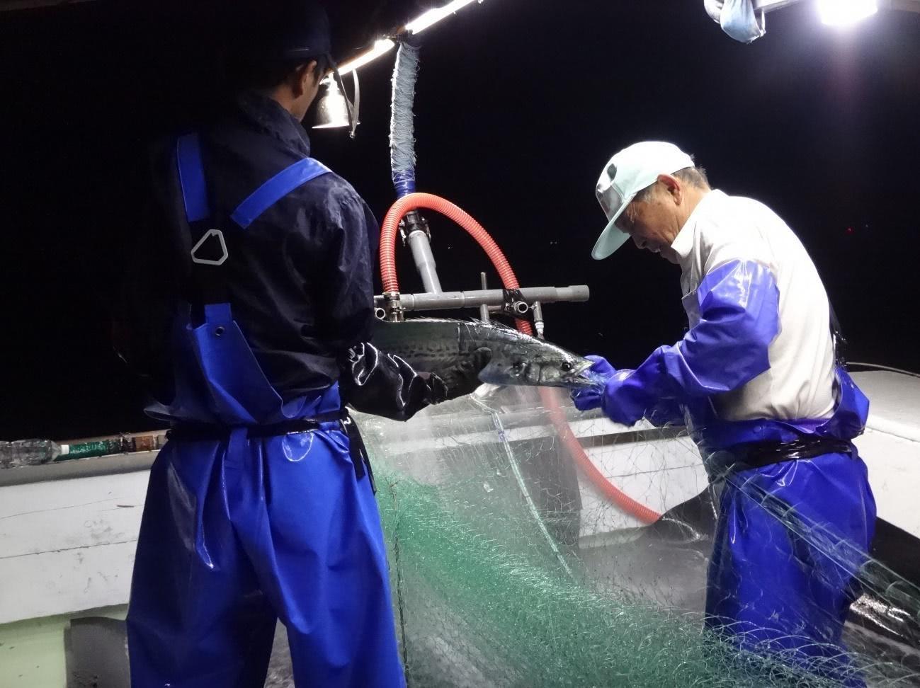 大きな網目で大きなサワラを狙う(香川県農政水産部水産課提供)