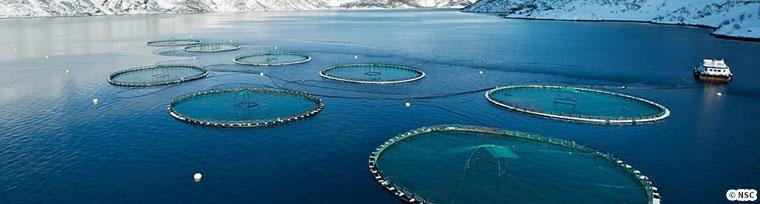 円形の養殖施設
