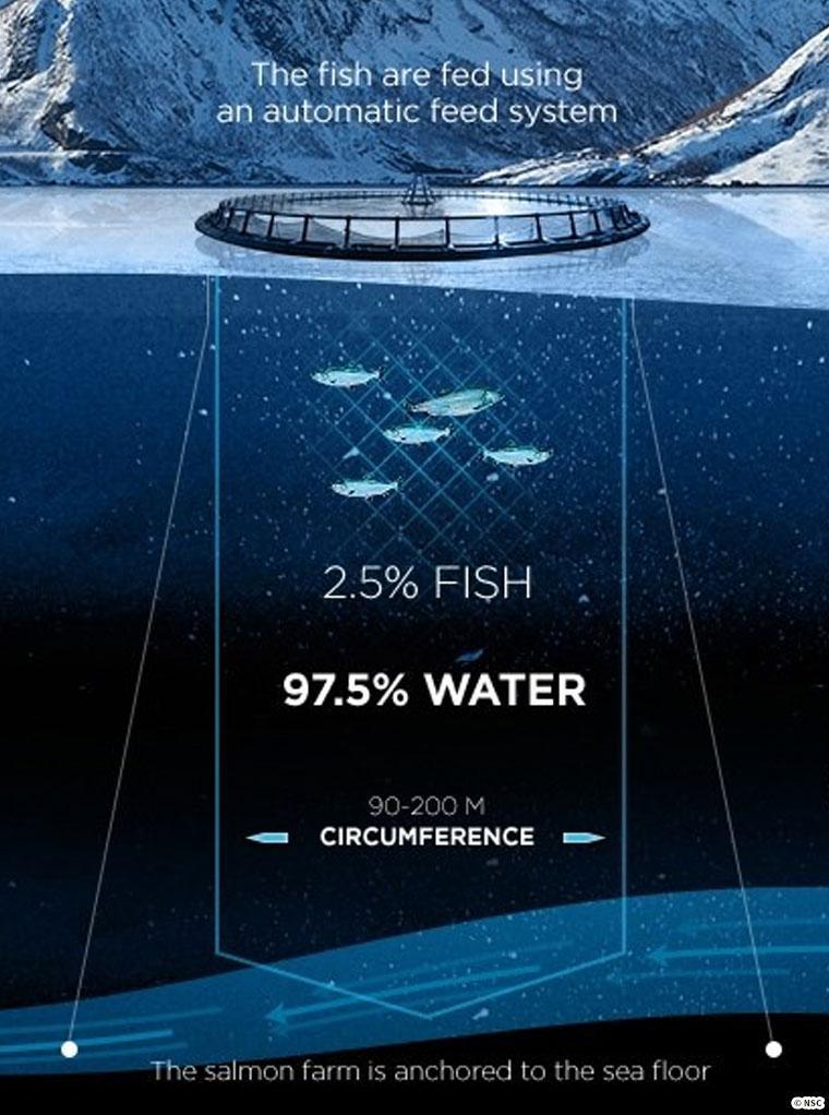 養殖池の海水と魚の割合を示す図