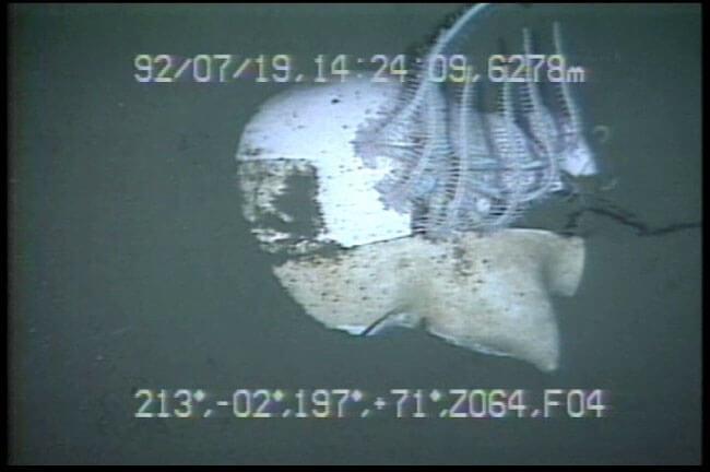 (C)JAMSTEC マネキン / 日本海溝 宮古東方海側 潜航:1992/07/19 撮影:有人潜水調査船「しんかい6500」
