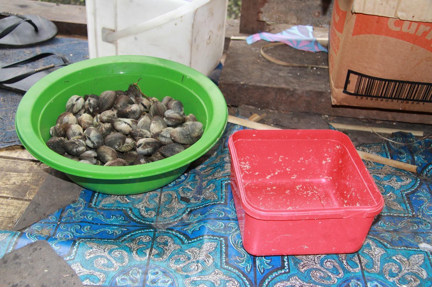 貝を漁獲する女性が増えました