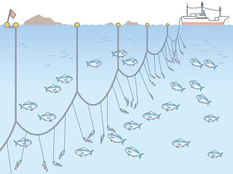 はえ縄漁の図