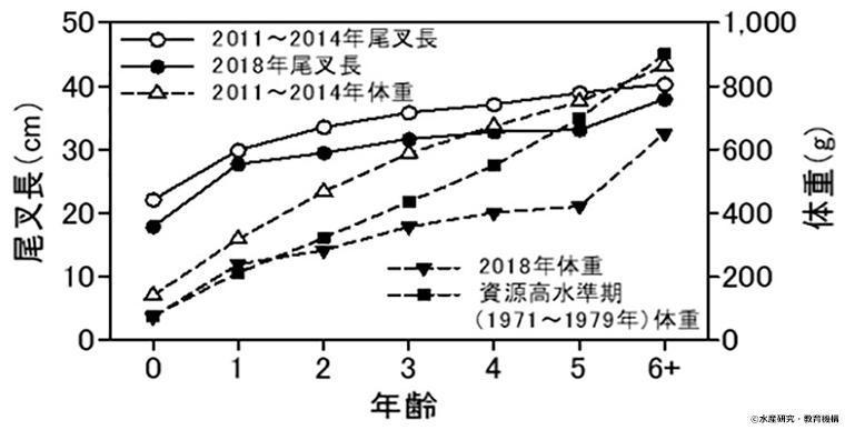 マサバ太平洋系群ー年齢・尾叉長・体重のグラフ