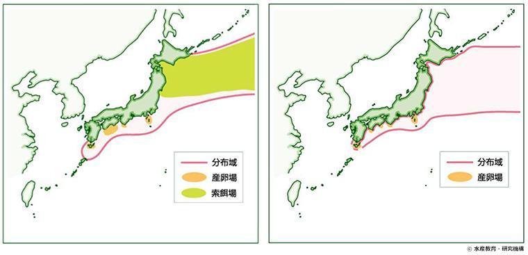 マサバとゴマサバの太平洋系群の分布図