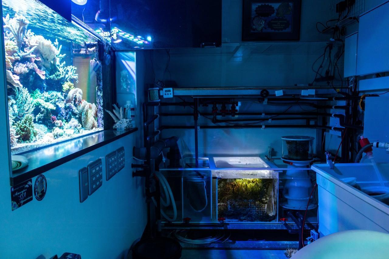 水槽内の環境を保つために必要なことをするための部屋