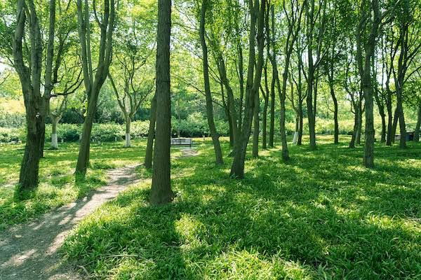 企業の環境保全活動は何のため? その理由やメリット・事例を解説!