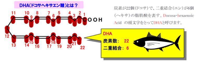 DHA(ドコサヘキサエン酸)とは?