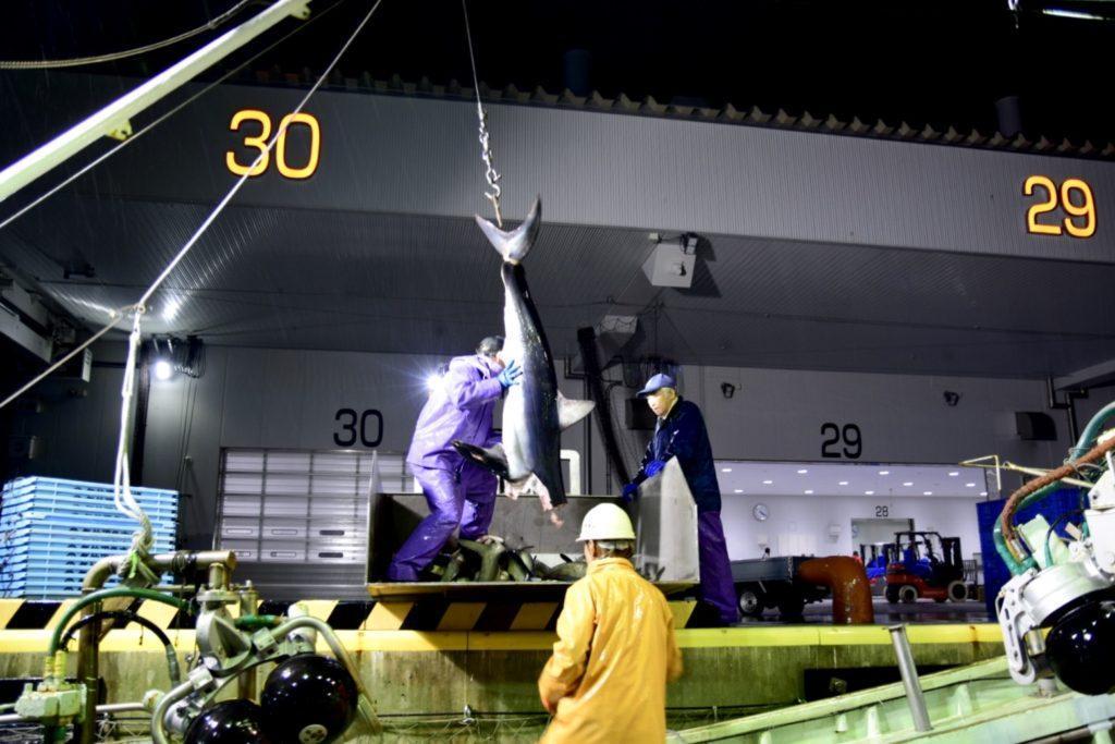 大きな魚を吊り上げて船から下ろす