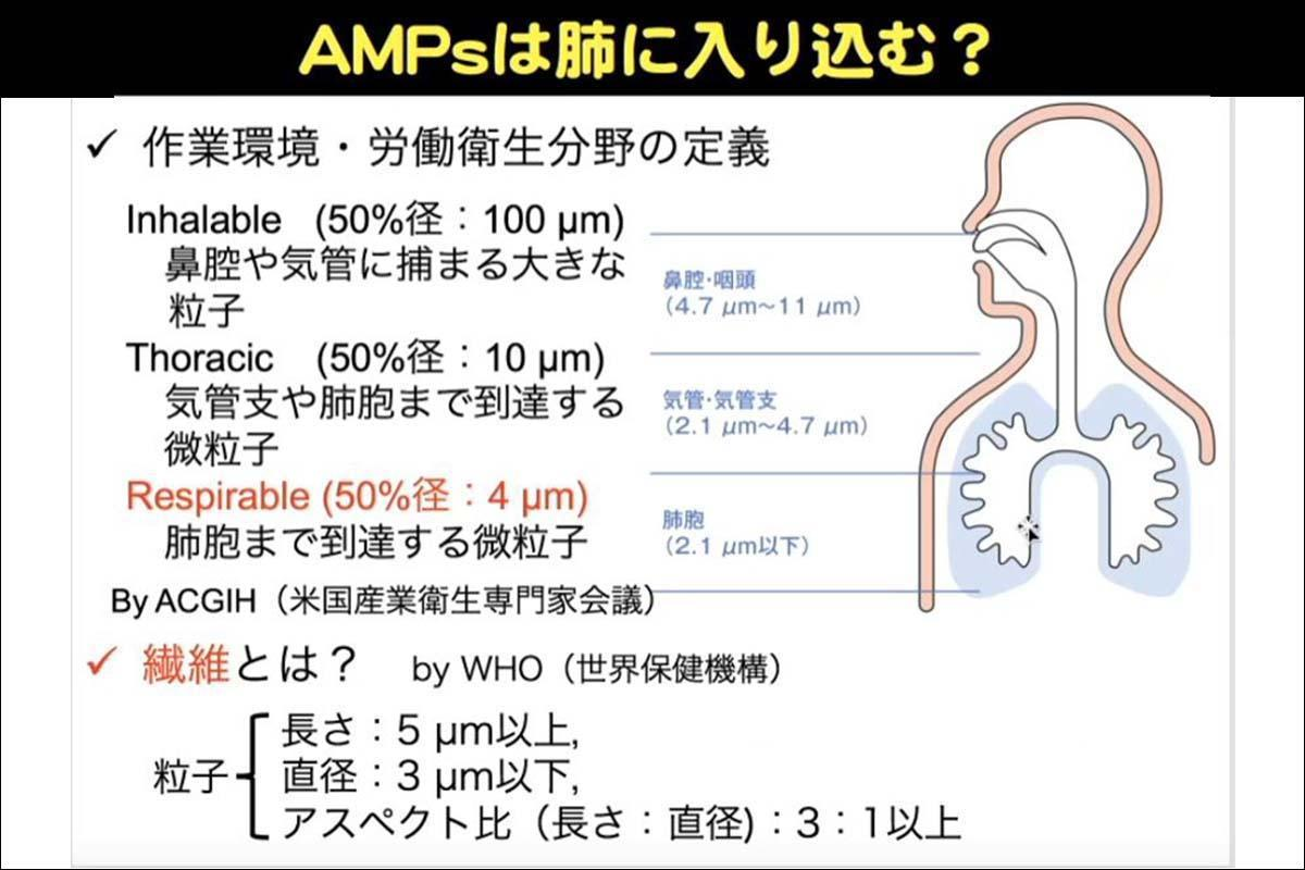 AMPsは肺に入り込む?
