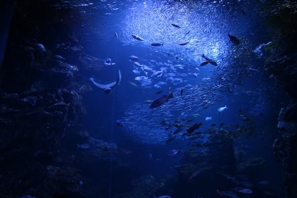 海だけじゃなかった! 深海や山にも残り続けるプラスチックごみの恐怖