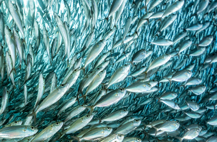 数字で見る水産物の世界