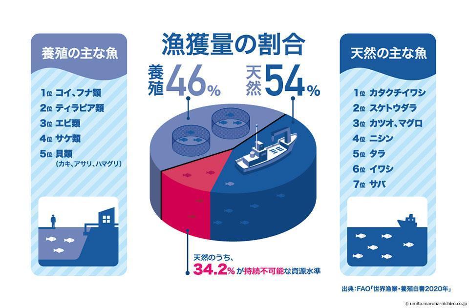 漁獲量の割合 天然魚54% 養殖魚46%