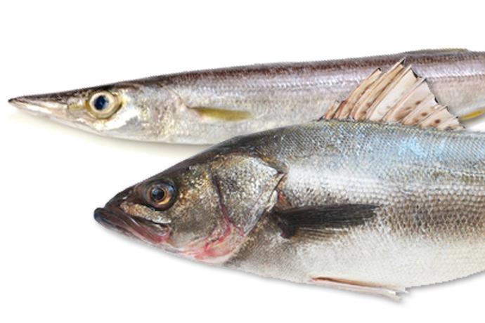 梭子魚、鱸...なんて読む? 初冬に美味しい魚2種