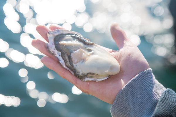 知りたい!牡蠣養殖のすべて
