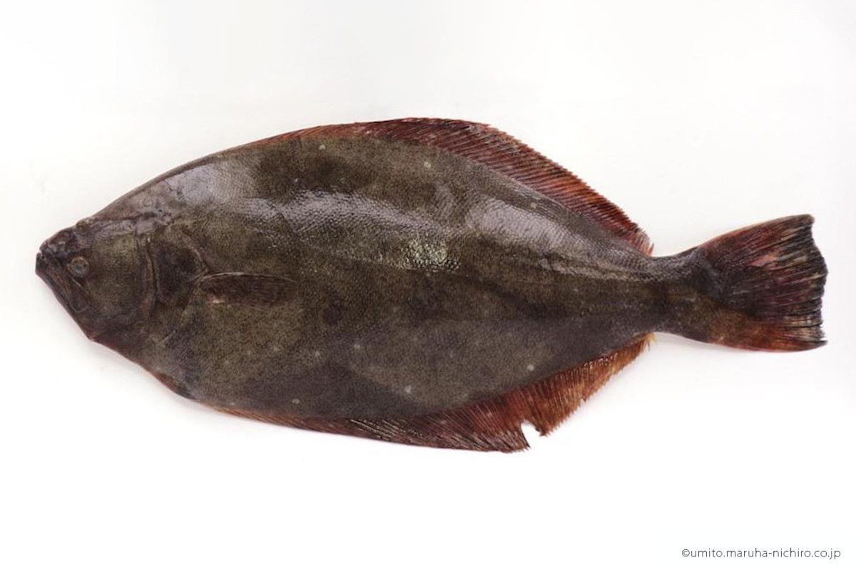 「寒」がつくとうまい魚、ヒラメ