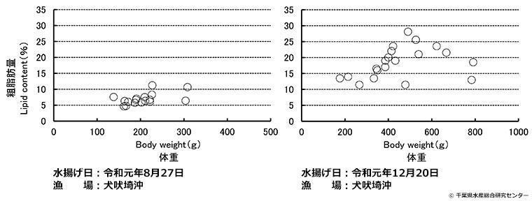 体重と粗脂肪量のグラフ。8月と12月とを比較すると、12月の方が粗脂肪量が多い