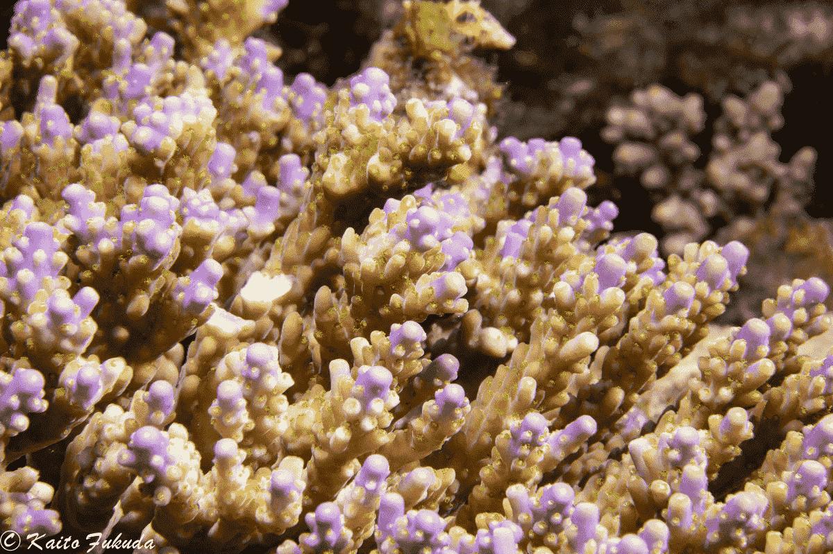 「生物は弱いものしか進化しない」危機の時代に、人間がサンゴから学べること【後編】