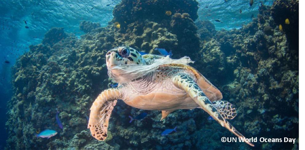 プラスチックゴミが絡まるウミガメ