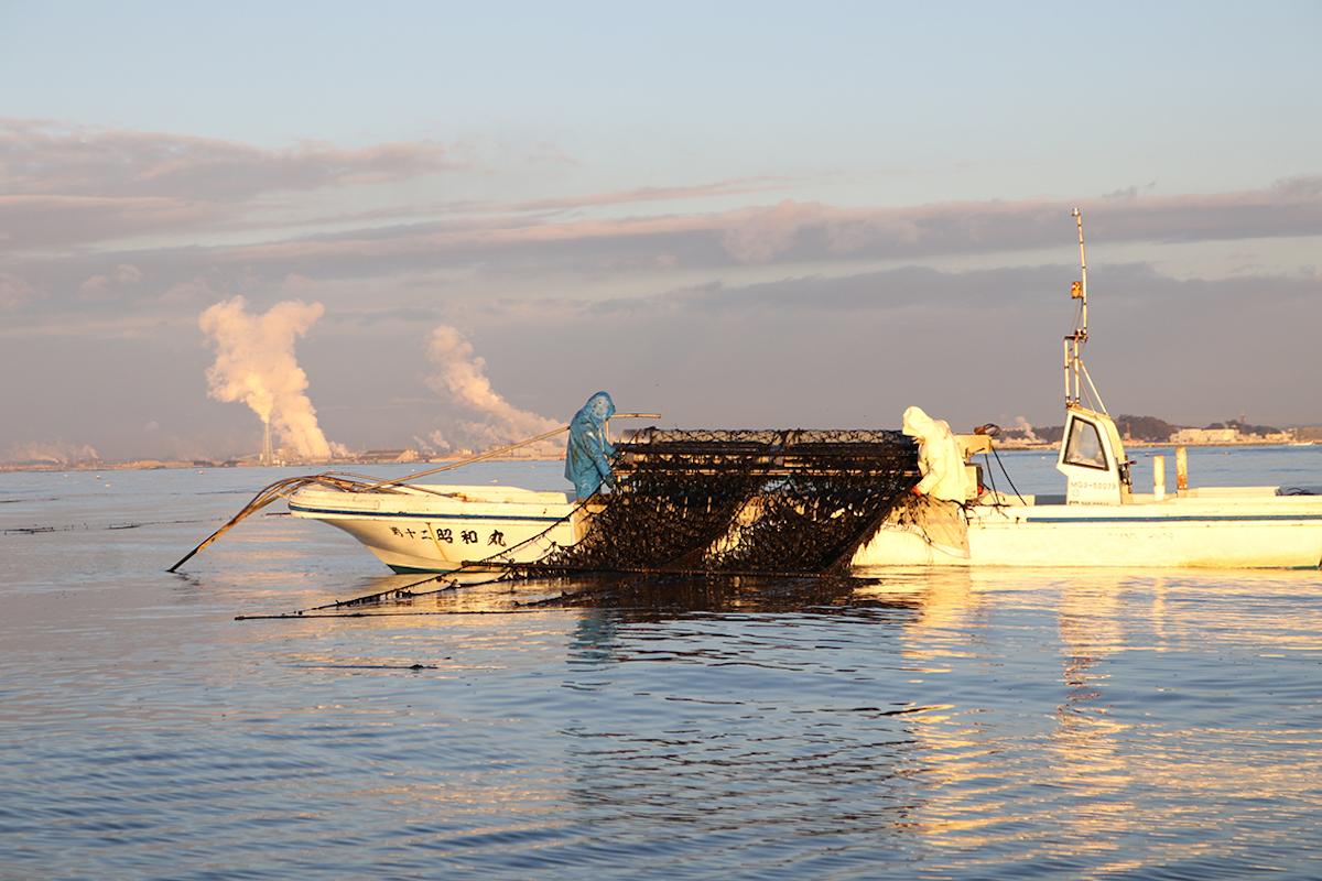 海苔を船に引き上げる写真