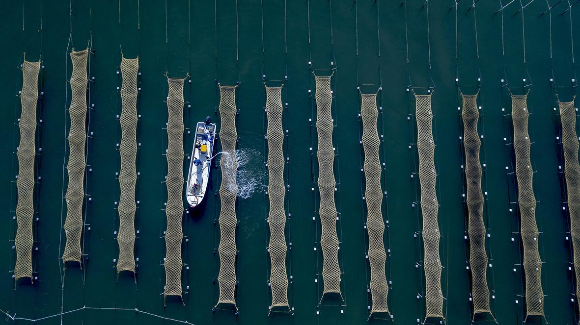 上空から撮影した海苔網